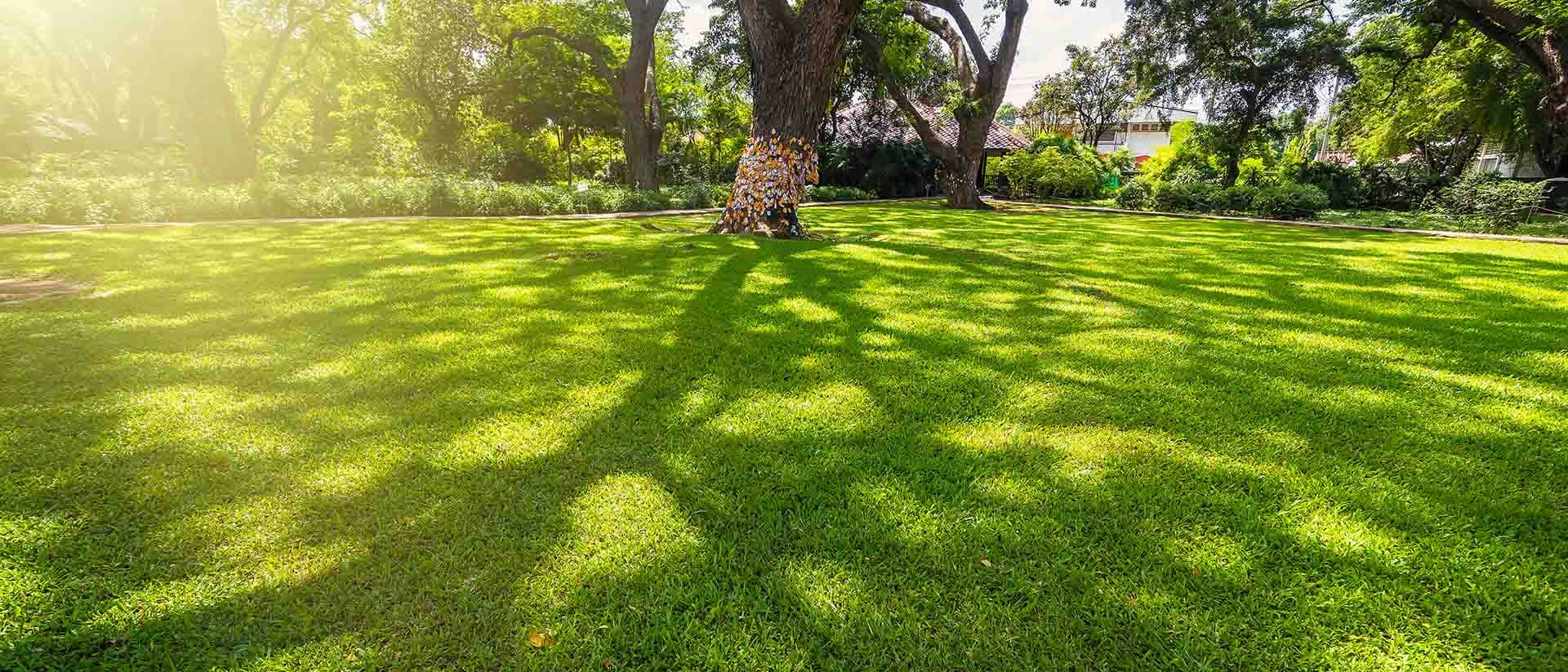 An image of a beautiful green lawn. A few big trees in the yard. The sun is setting and there are shadows from the trees.