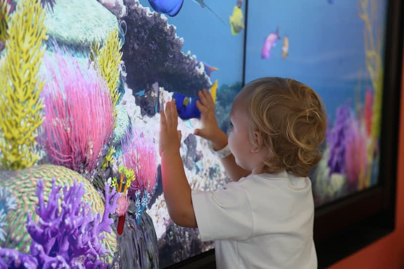 A toddler interacts with the aquarium wall.